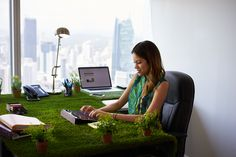 Best Plants to Increase Productivity and Promote Well-Being in the Office