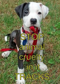 Stop animal cruelty!! They weren't put on this earth for us to own n hurt them! WE were put on this earth so they could share their hearts with us! So be smart and don't break it!! Because once it's gone, it's gone...