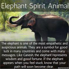 Elephant Spirit Animal, Elephant Quotes, Elephant Facts, Elephant Love, White Elephant Meaning, Quotes About Elephants, Asian Elephant, Animal Meanings, Animal Symbolism