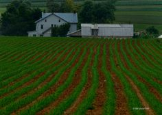 Rows planted by rustic farm equipment in #Lancaster County Pa