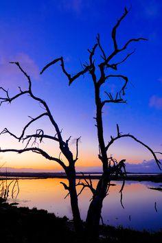 "Photo of the day: ""Scissorhands"" www.davidclarkphotoblog.com   #canon #photography #sunsetoftheday #sunsetsaturday #landscapephotography"