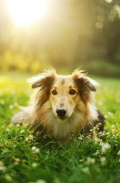 Collie. I'm getting this kinda dog someday it has always been my favorite kind of dog