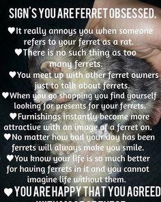 Funny Ferrets, Go Shopping, Mink, Finding Yourself, Instagram Posts, Fun Stuff, Butterflies, Birds, Animals