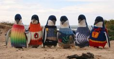Knitted sweaters are saving the lives of penguins that have been smothered in oil pollution.
