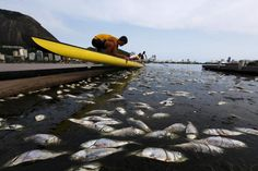 Dead fish are pictured next to a rowing athlete as he puts his boat on the water before a training session at the Rodrigo de Freitas lagoon, in Rio de Janeiro, Brazil, April 13, 2015. About 500kg of fish have been removed from the lagoon since last week after sea cold water got into the lagoon, authorities said, according to local media. Rodrigo de Freitas lagoon will host the rowing and canoe sprint competitions in the 2016...