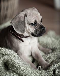 my puppy kobe