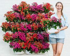 How Much Does a Vertical Garden Cost
