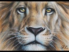 Colored pencil drawing ANIMAL WILDLIFE portrait (Art by Ch. Karron) - YouTube,