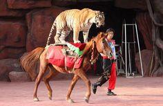 Projeto de lei pede a proibição de espetáculos com animais em circos, veja | NewPangea