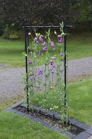 Bildresultat för luktärt växtstöd