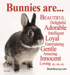 Bunnies are... Beautiful, adorable, intelligent, loyal, entertaining & so much more! www.best4bunny.com