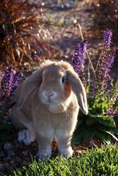 Spring bunny..awww..