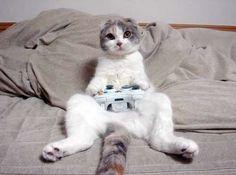 Kot też człowiek. Chwila grania się należy ;) // Everyone deserves to enjoy the game ;)