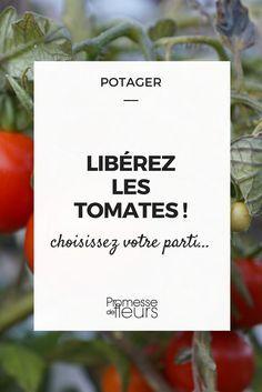 Et si on arrêtait de tailler les tomates ? #potager #tomate #taille