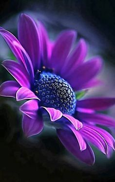 Beautiful Flowers Images, Beautiful Flowers Wallpapers, All Flowers, Flowers Nature, Exotic Flowers, Amazing Flowers, My Flower, Pretty Flowers, Flower Art