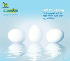 A wonderful way to test the freshness of eggs is to put them on a float test. Old and stale eggs float in water due to air cell inside the egg that becomes large as the egg ages and acts as a buoyancy factor. Fresh eggs sink and always lie at the bottom.