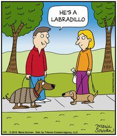 Labradillos are the new #Labradoodles! | Read Half Full #comics @ http://www.gocomics.com/half-full/2015/06/08?utm_source=pinterest&utm_medium=socialmarketing&utm_campaign=social-pin | #GoComics #webcomic #dogs #breeds