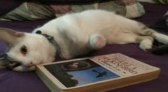 What Your Cat Really Thinks About Your Book Habit