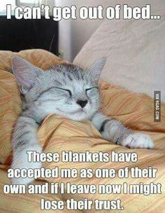 Cat * bed * sleep * blankets