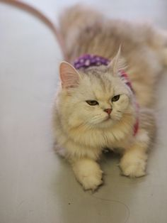 毎日がんばってます!愛ペットスタッフブログ&猫・アビ・ソマリ・チンチラの事