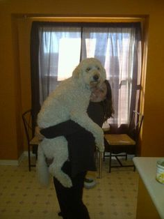 glad i'm not the only one who holds my boyfriends standard poodle like this.