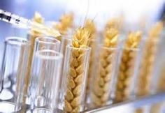 Tell the FDA: GMOs Aren't Natural. Petition page w/ a concise explanation of the issues w/ GMOs.