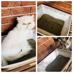 Ceramic toilet for cats. Idustrial collection Asha and Mia are happy Shag Rug, Ceramics, Happy, Animals, Collection, Decor, Shaggy Rug, Ceramica, Animales