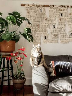 Sarah Blasai's Cat, Ellie, Helps Makes Her House A Home On Design*Sponge