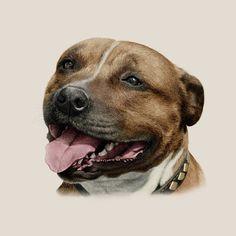 Pet Portraits by Steph Dix
