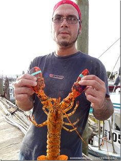 Steve Redfern From The Lobster Boat Trapper John Displays Calico Lobster They Caught