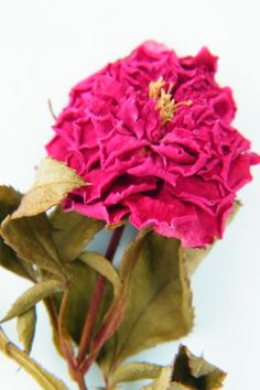 A mini dried rose with stem - perfect for craft or decorations from daisyshop.co.uk