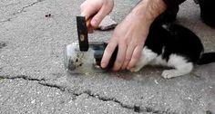"""""""O Grito do Bicho"""": Muito cuidado para tirar a cabeça de um gatinho do..."""