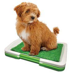 Puppy Training Pad | Lenoxx Electronics Australia Pty Ltd