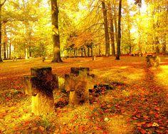Heidelberg - Graveyard Bergfriedhof