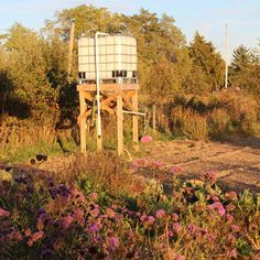Conserving Water with a Rainwater Cistern Tank and Gravity Watering System - Homesteading and Livestock Blog - MOTHER EARTH NEWS