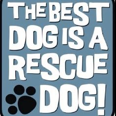 The Best Dog is a Rescue Dog!!