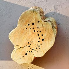 8 stylish bug hotels | Wood slice | Sunset.com  Holes in a solid slice of wood are homes for solitary bees.