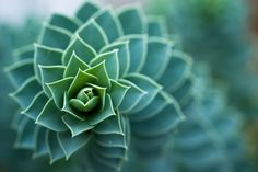 Researchers have developed a mathematical model that can accurately recreate spiral patterns seen in plants.