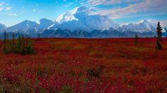 denali_national_park_landscapes_mountains.jpg (1920×1080)