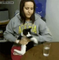 This is so cute!!  Déjame beber humana. cat-wants-to-drink-from-glass.gif (270×276)