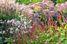 Fabulous looking and low care, this attractive late summer combination of ornamental grasses and perennials is a feast for the eye