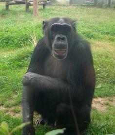 Turkish Carli at Monkey World