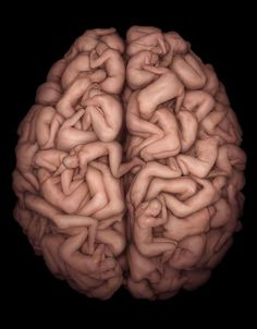 The Anatomy Of The Human Brain
