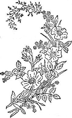 1886 Ingalls Wild Rose Spray1 | Flickr - Photo Sharing!