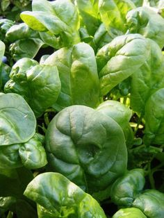 Five Foods Women Should be Eating  Spinach