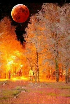 Looks like trees are aflame. Sky too dark to be sunrise. Beautiful Sunset, Beautiful Places, Beautiful Pictures, Moon Photography, Landscape Photography, Stars Night, Shoot The Moon, Winter Scenery, Moon Art