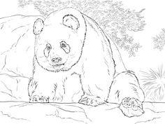 Panda Coloring Pages Free Printable Enjoy Coloring