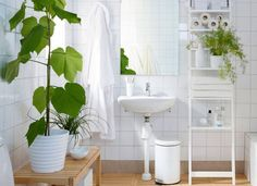 8 Shower Plants That Want To Live In Your Bathroom Plant Wall In The Bathroom House Bathroom Plants Plants Bathroom Ikea Satsumas In 2019 House Plants Decor Pla Ikea Bathroom, Bathroom Furniture, Small Bathroom, White Bathroom, Plants For Bathroom, Bathroom Ideas, Green Bathrooms, Wood Bathroom, Bad Inspiration