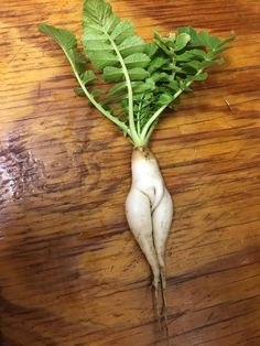 Well, this is uncomfortable. Weird Fruit, Funny Fruit, Strange Fruit, Weird Food, Fruit And Veg, Fruits And Veggies, Funny Animal Pictures, Funny Images, Funny Vegetables