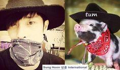 """#cowboy #sunghoon .VS. #cowboy #piggy^^ cute poster from fans Thank you."""
